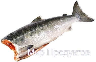 кижуч1