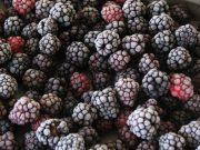 frozen_blackberries-1024×768