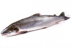 Красная рыба: лосось, семга и др.